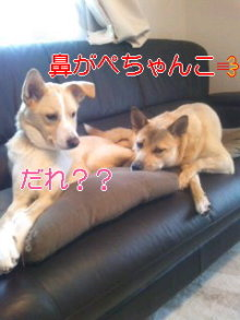 2人と4頭のワンコまみれブログ-111224_0733~01_0001.jpg