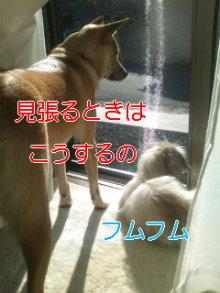 2人と4頭のワンコまみれブログ-111224_1309~02_0001.jpg