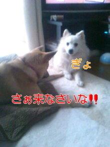 2人と4頭のワンコまみれブログ-111223_1608~01_0001.jpg