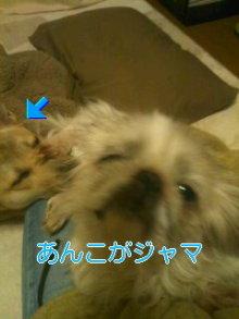2人と4頭のワンコまみれブログ-111224_1911~01_0001.jpg