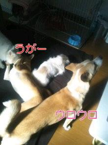 2人と4頭のワンコまみれブログ-120128_1048~02_0001.jpg