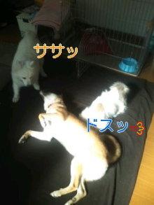 2人と4頭のワンコまみれブログ-120128_1048~03_0001.jpg
