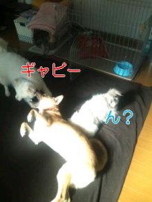 2人と4頭のワンコまみれブログ-120128_1048~01_0001.jpg