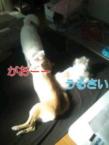 2人と4頭のワンコまみれブログ-120128_1047~02_0001.jpg