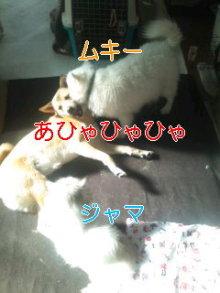 2人と4頭のワンコまみれブログ-120129_1022~01_0001.jpg