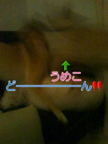 2人と4頭のワンコまみれブログ-120126_2311~01_0001.jpg