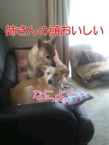 2人と4頭のワンコまみれブログ-120129_1259~01_0001.jpg