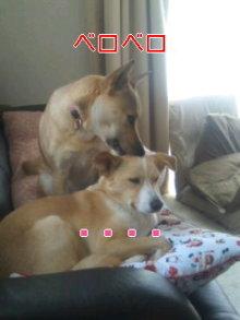 2人と4頭のワンコまみれブログ-120129_1259~02_0001.jpg