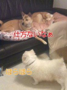2人と4頭のワンコまみれブログ-120129_2103~01_0001.jpg