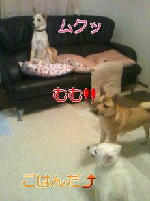 2人と4頭のワンコまみれブログ-120129_2105~03_0001_0001.jpg