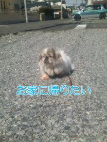 2人と4頭のワンコまみれブログ-120219_1211~01_0001.jpg