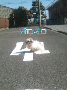 2人と4頭のワンコまみれブログ-120219_1213~01_0001.jpg