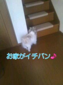 2人と4頭のワンコまみれブログ-120219_1221~01_0001.jpg