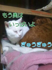 2人と4頭のワンコまみれブログ-120223_1231~01_0001.jpg