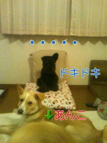 2人と4頭プラスわんのブログ-120317_0142~01_0001.jpg