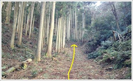 taniyama006.jpg