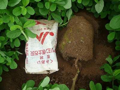 肥料袋につまった土を畑にポイ