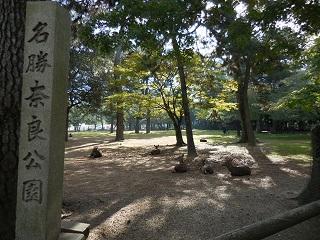 yamatoa36.jpg