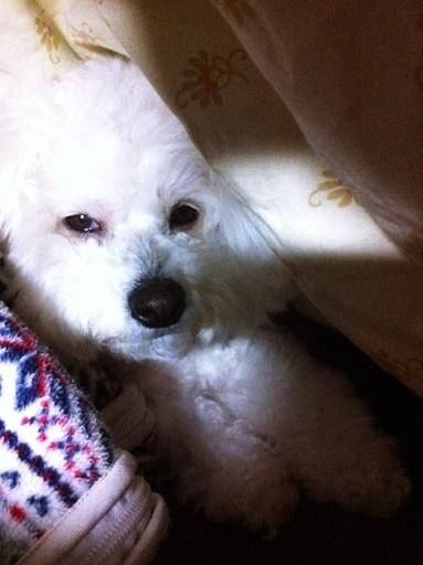 占領する犬 (3)