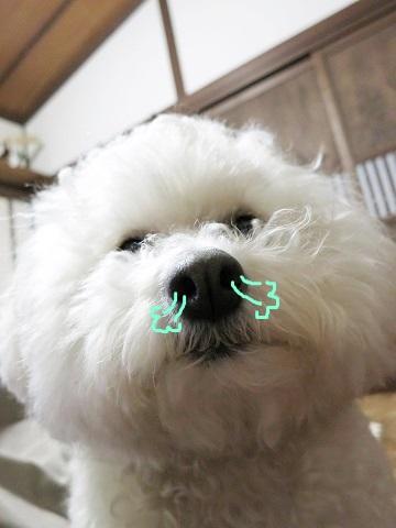 かまってちゃん (4)