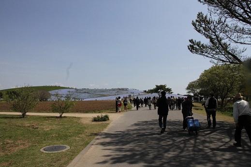 ひたち海浜公園 見晴らしの丘編 (2)