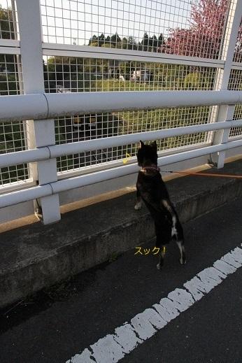 お子様ぽんてぃ (4)