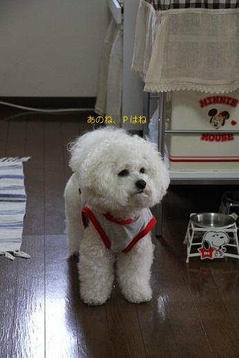 笑う犬、笑わない犬 (2)