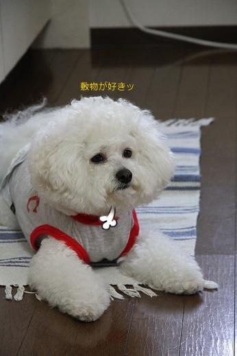 笑う犬、笑わない犬 (3)