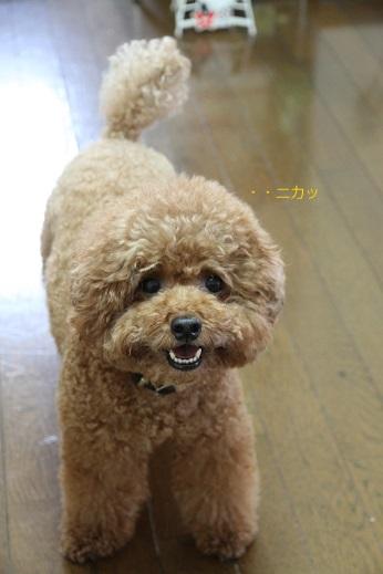 笑う犬、笑わない犬 (4)