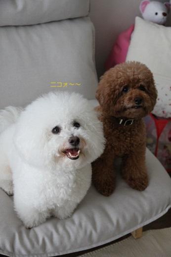 笑う犬、笑わない犬 (6)