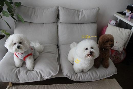 笑う犬、笑わない犬 (7)