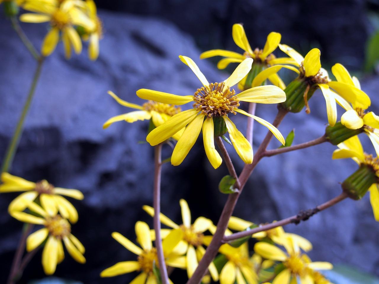 BotanicalGarden04_20141115.jpg