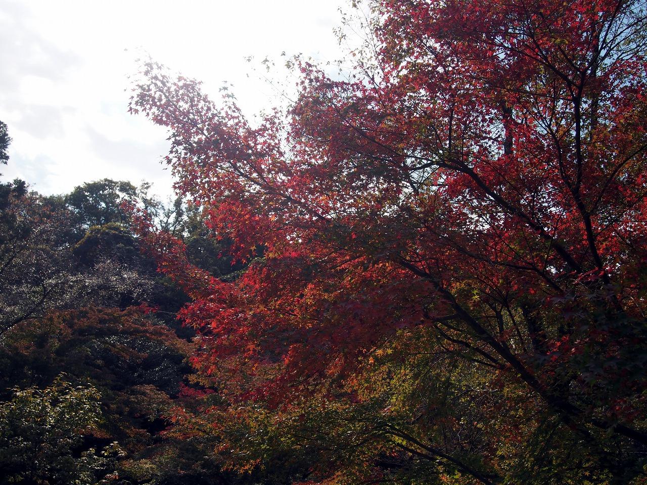 BotanicalGarden05_20141115.jpg