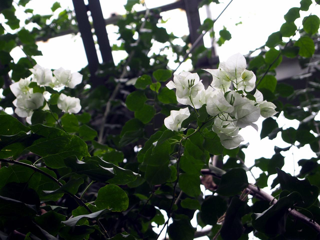 BotanicalGarden100_20141115.jpg