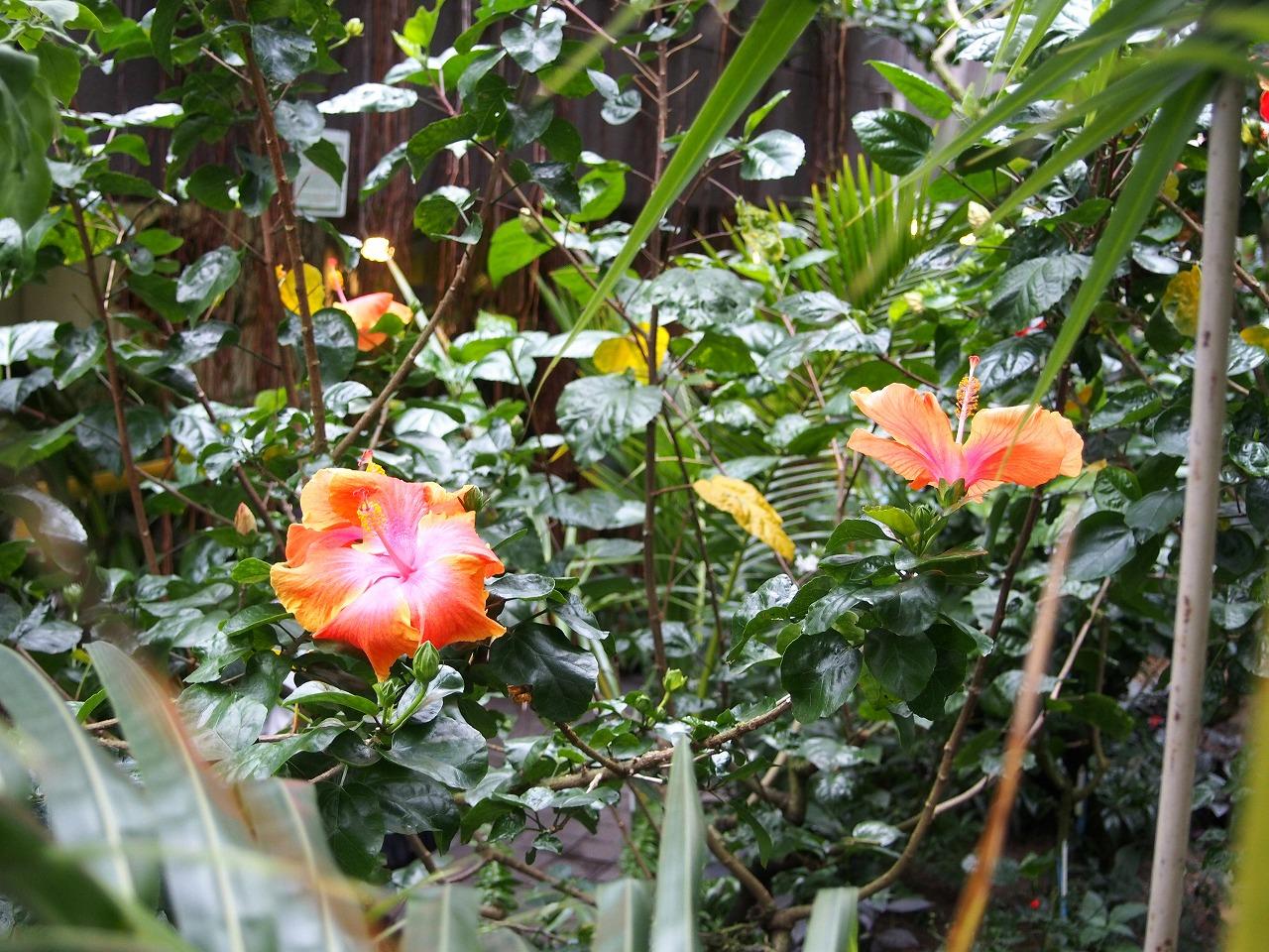 BotanicalGarden101_20141115.jpg