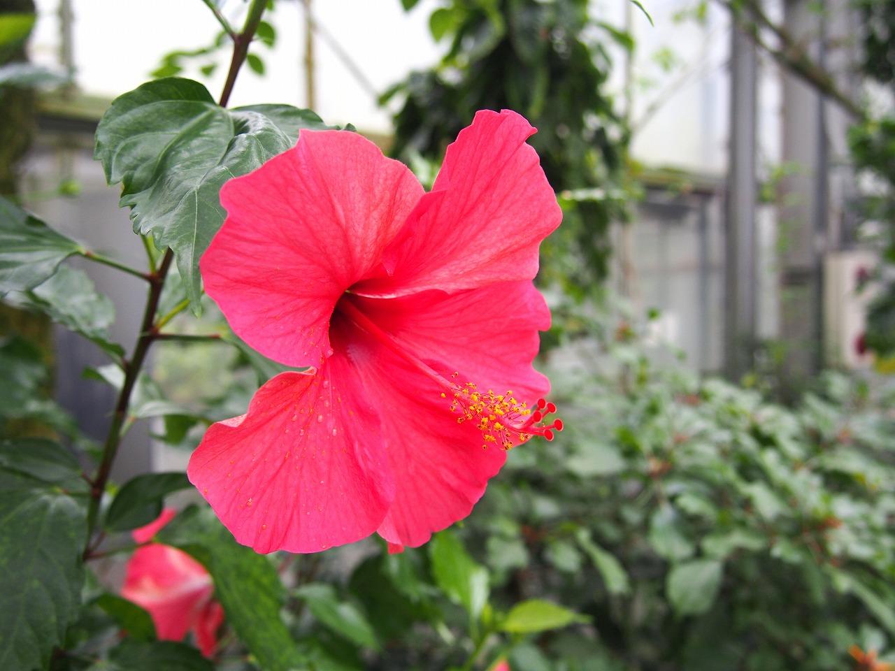 BotanicalGarden102_20141115.jpg