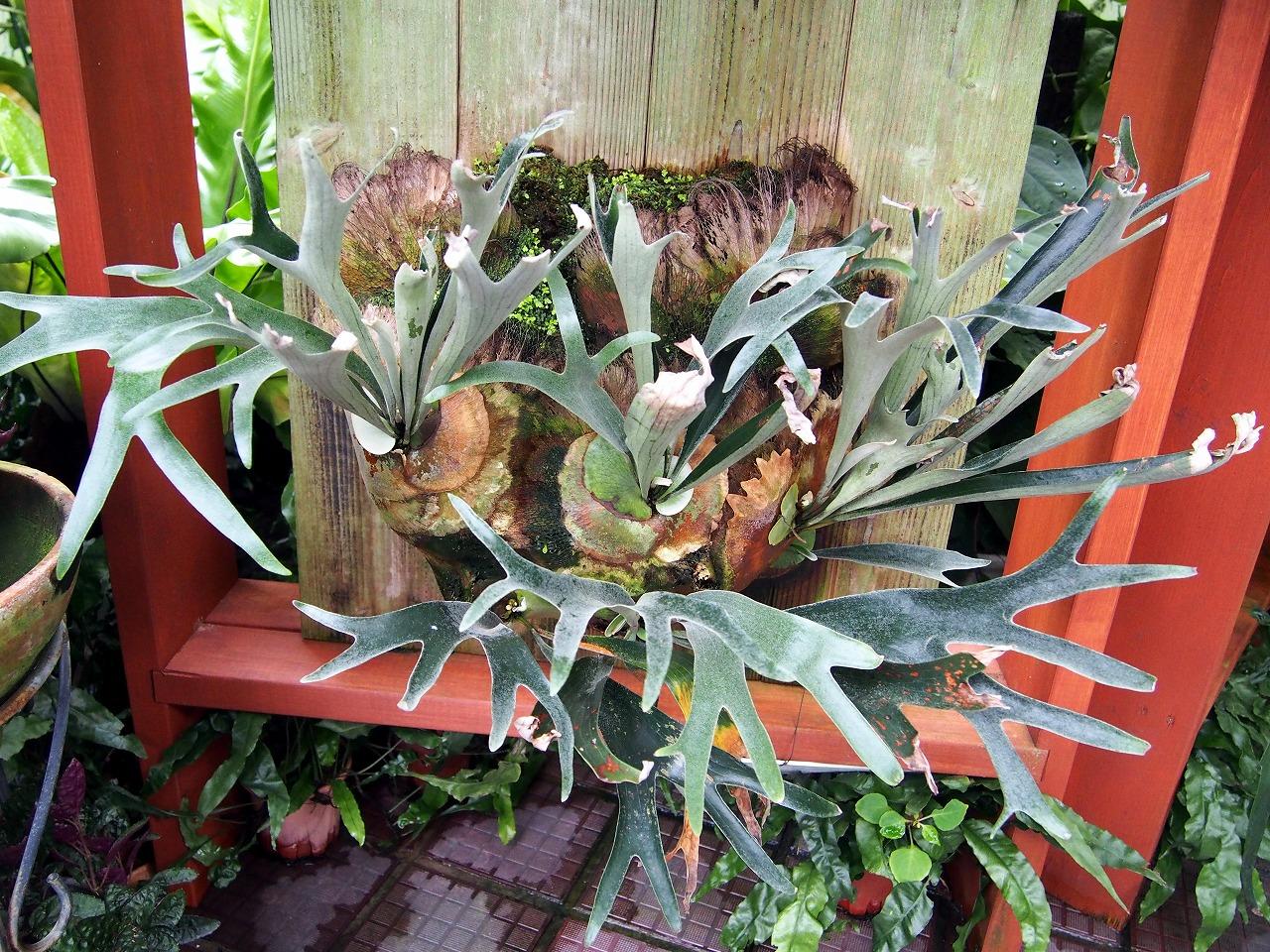 BotanicalGarden105_20141115.jpg