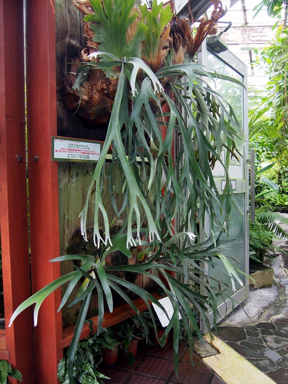 BotanicalGarden107_20141115.jpg