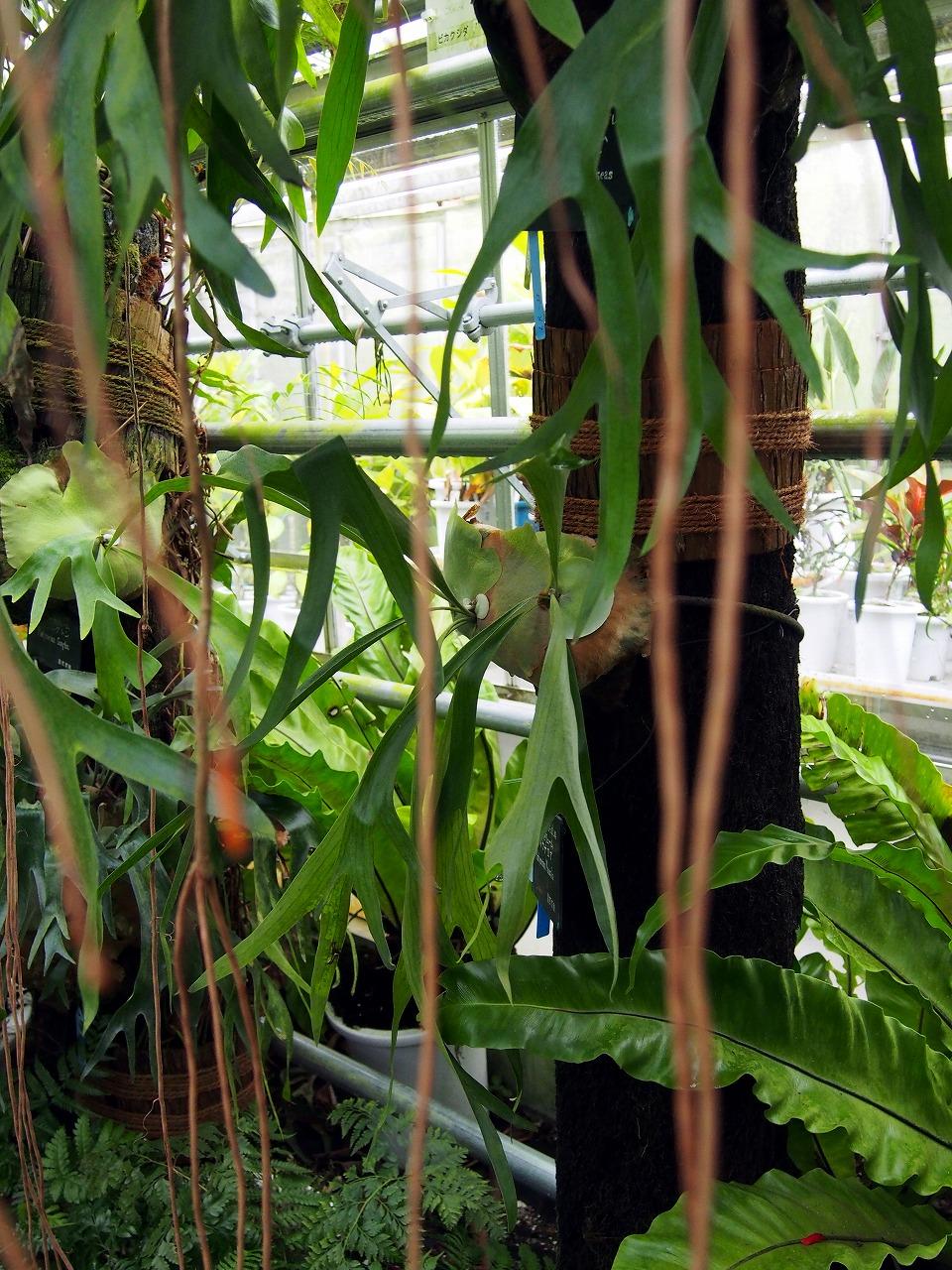 BotanicalGarden111_20141115.jpg