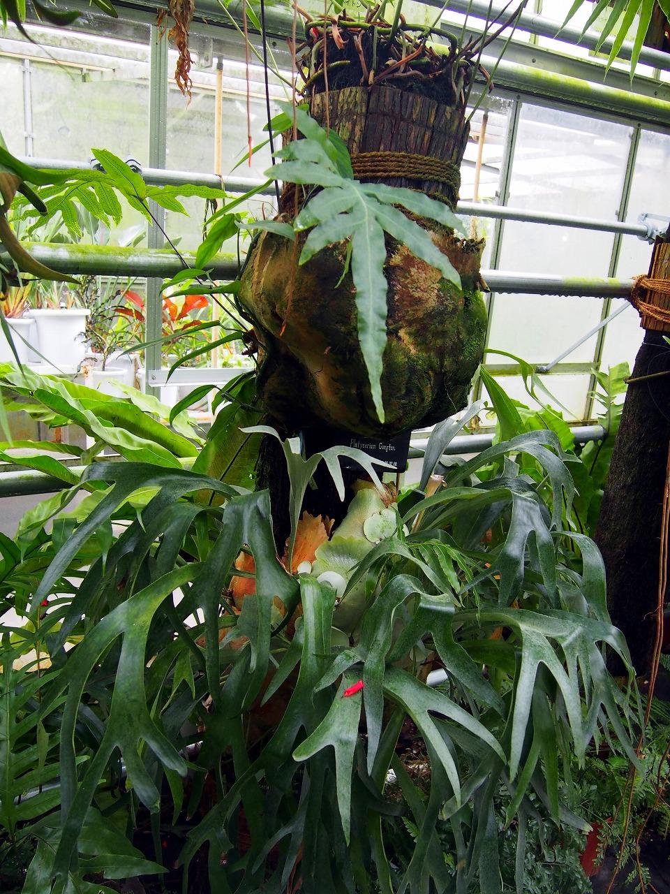 BotanicalGarden112_20141115.jpg