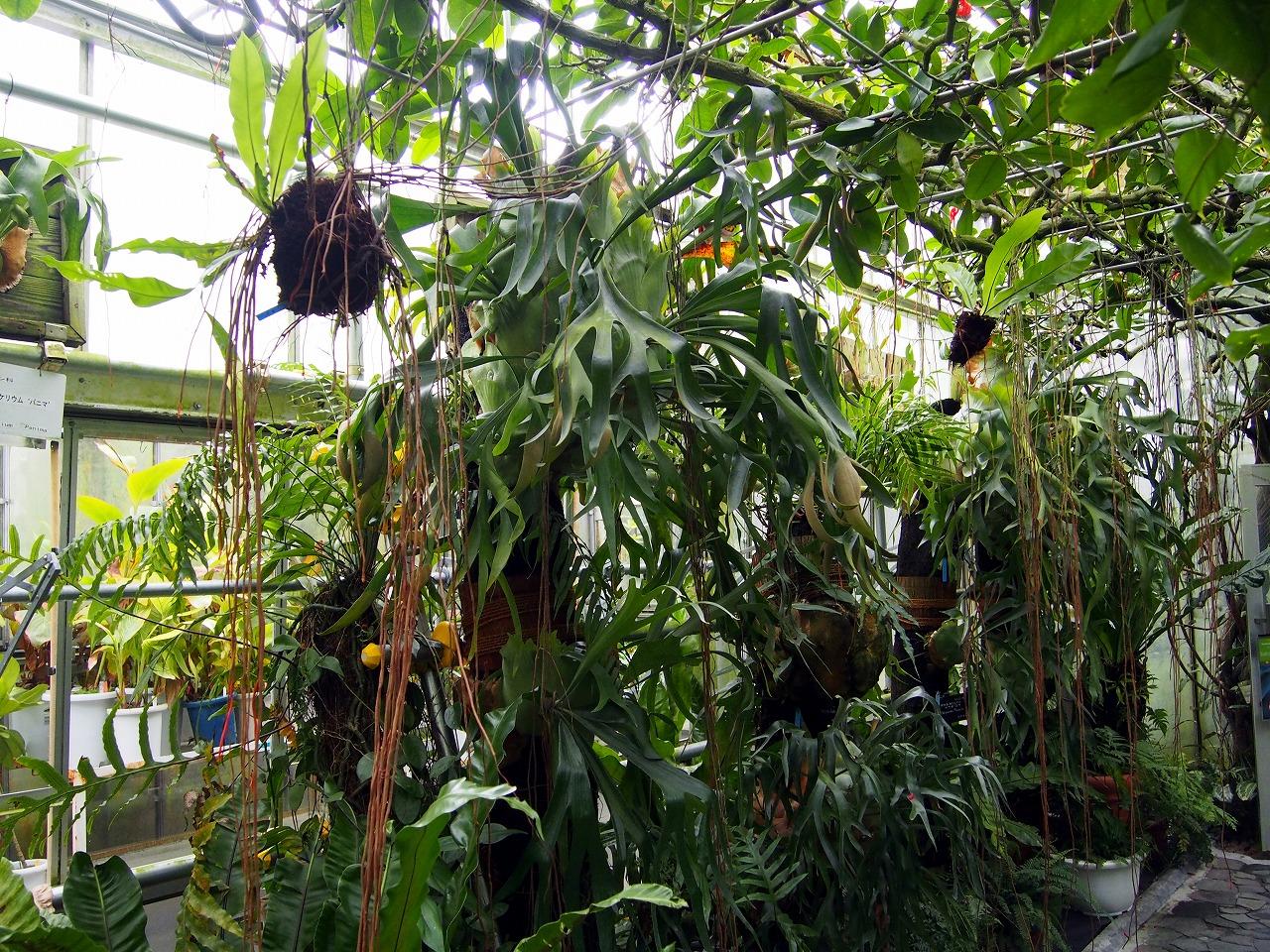 BotanicalGarden113_20141115.jpg