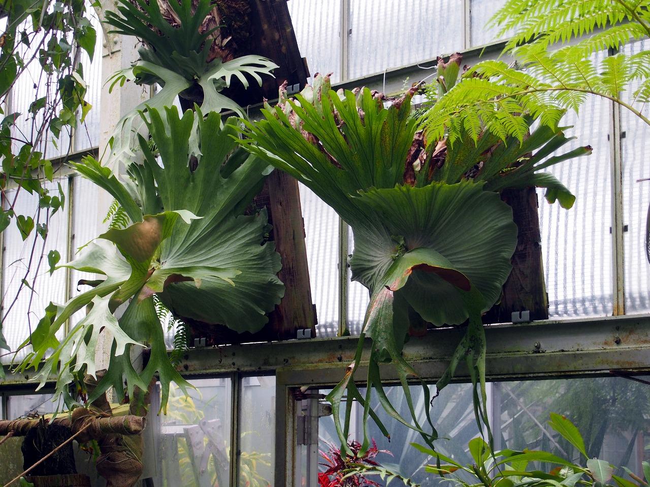 BotanicalGarden116_20141115.jpg