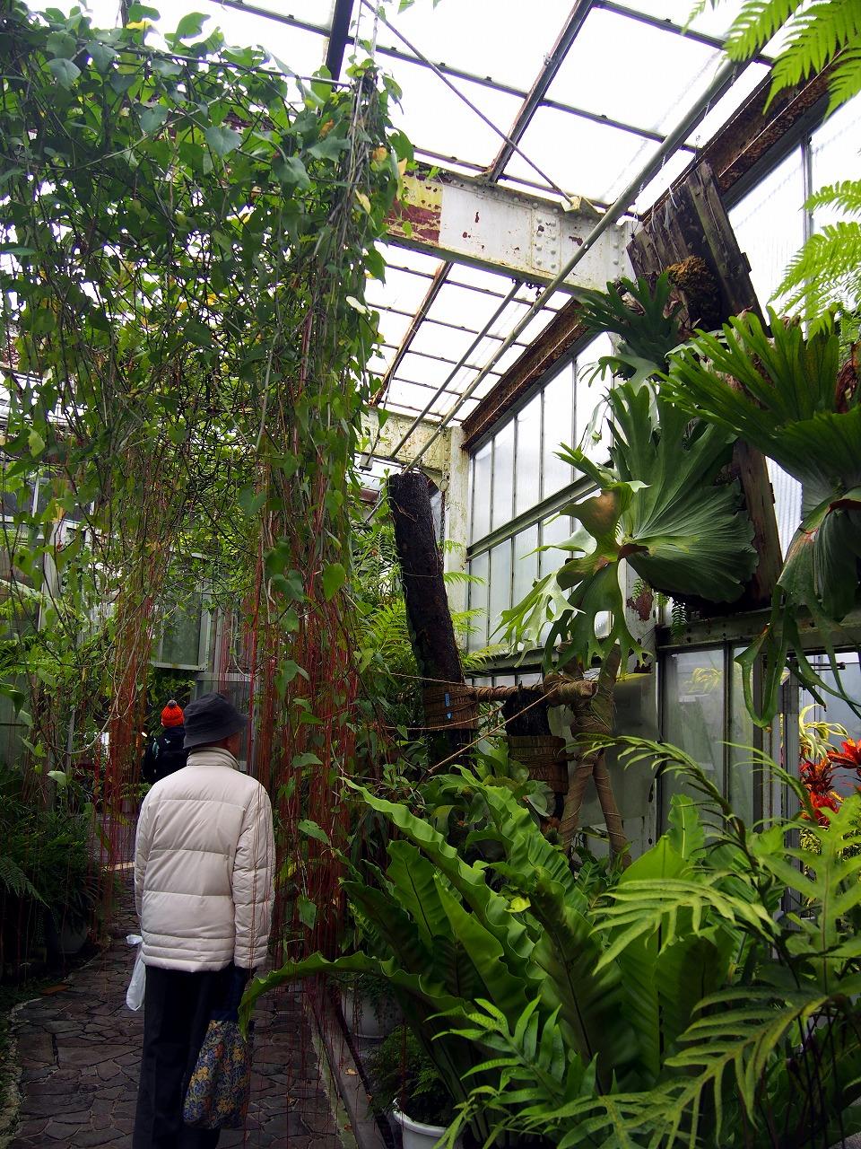BotanicalGarden118_20141115.jpg