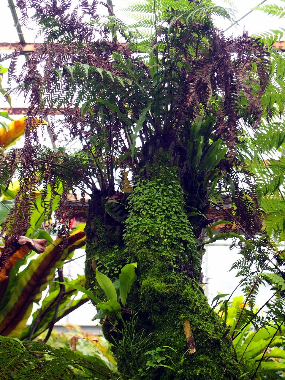 BotanicalGarden119_20141115.jpg