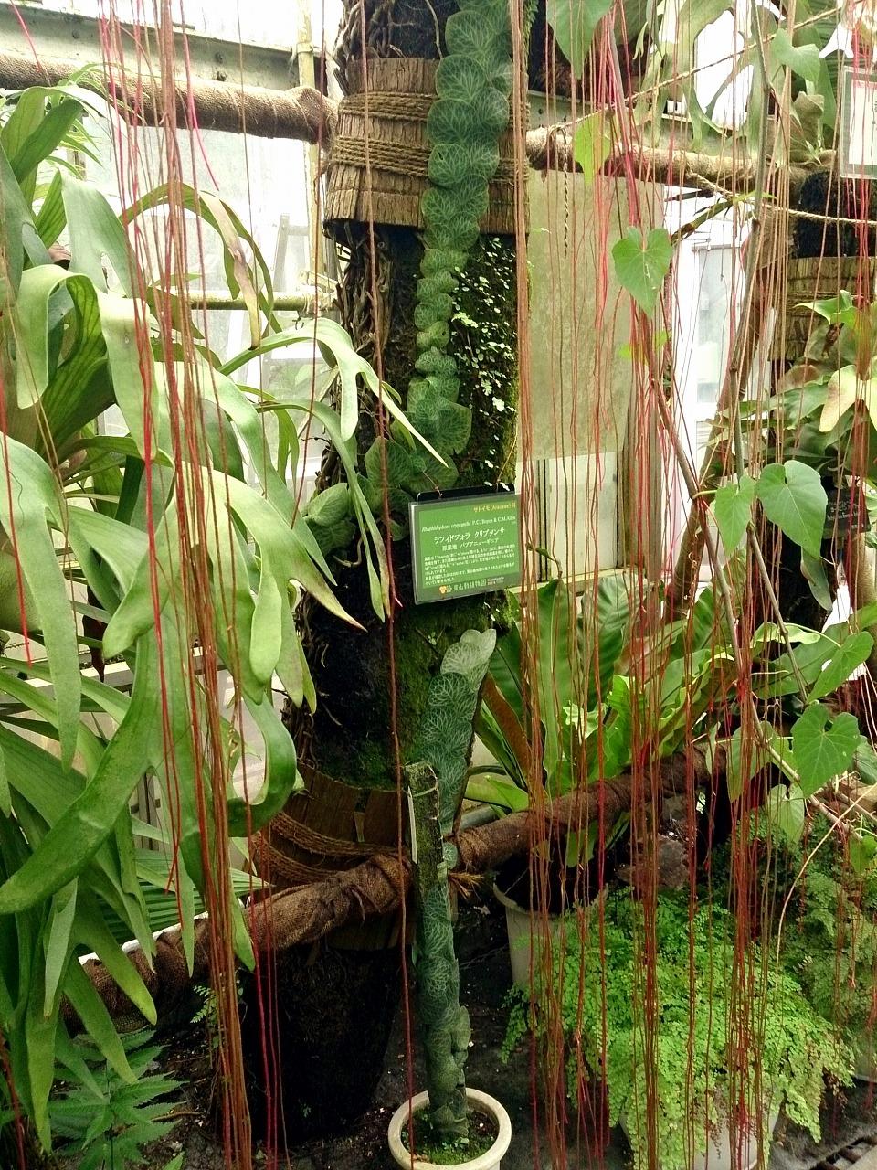 BotanicalGarden120-02_20141115.jpg