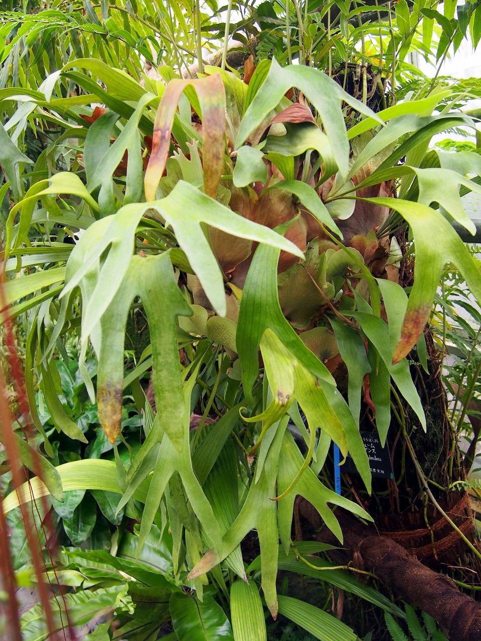 BotanicalGarden122_20141115.jpg