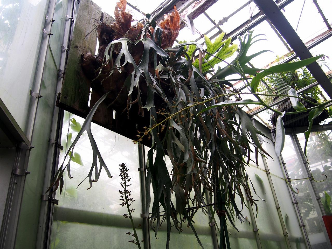 BotanicalGarden124_20141115.jpg