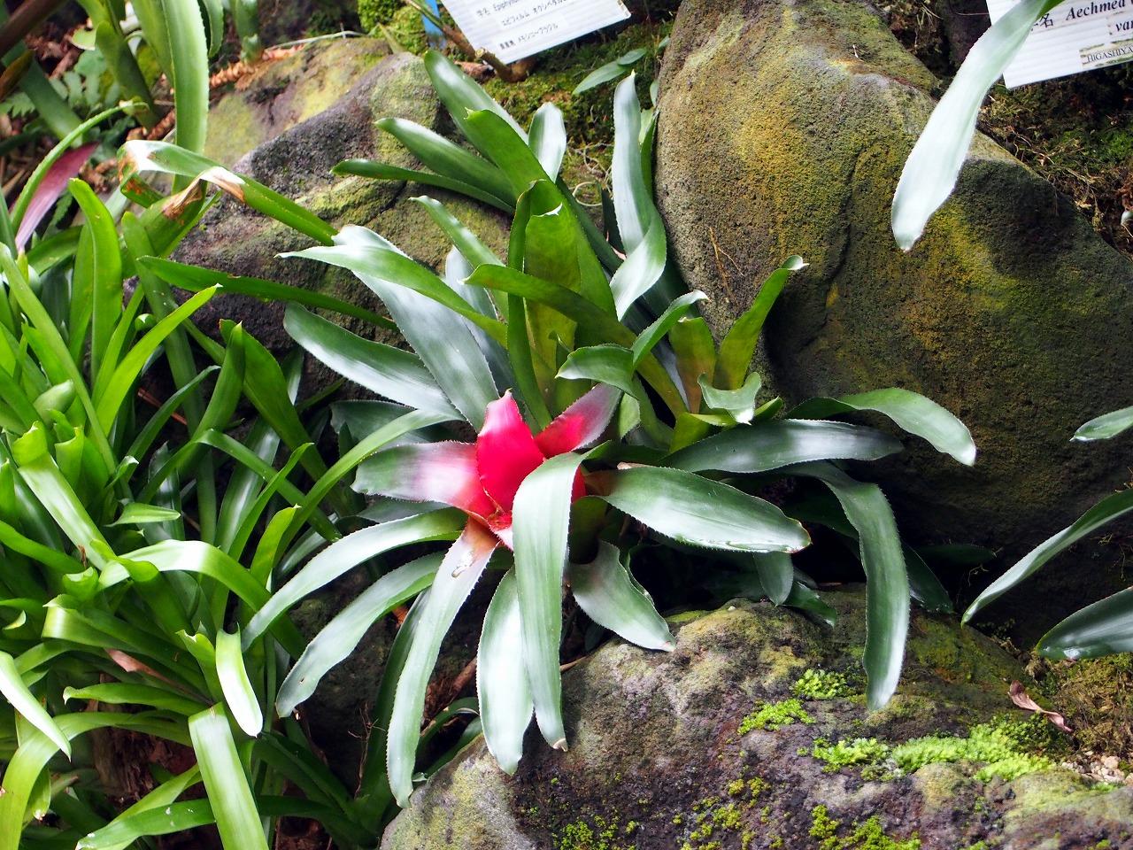 BotanicalGarden129_20141115.jpg