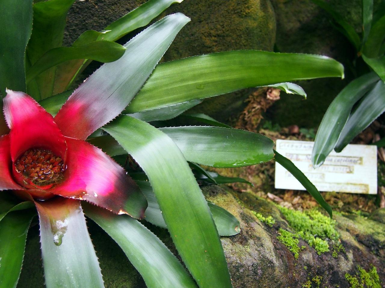 BotanicalGarden130_20141115.jpg