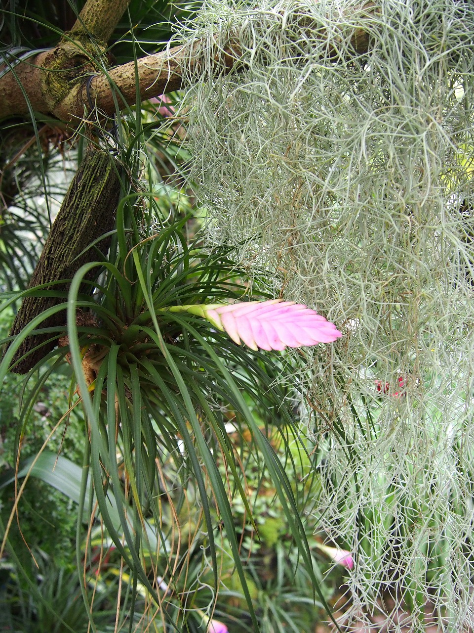 BotanicalGarden133_20141115.jpg